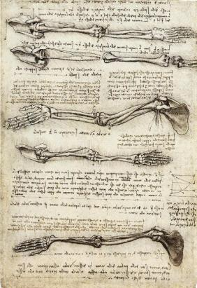 Anatomical study of the arm, c. 1510